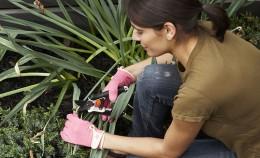 horticulteur-article