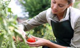 Maraicher en permaculture